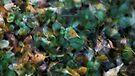 Autumn sweetness by Patrick Morand