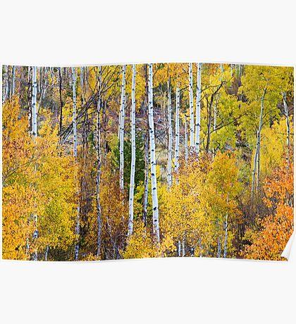 Aspen Tree Magic Poster
