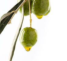 olive branch with olives and oil isolated on white background with copyspace by paulrommer
