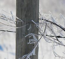 Fencepost in Winter  by Brenda Roy