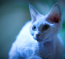 Devon Rex Cat (LX Poster) by whaturthinking