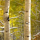 Twin Aspens  by Luann wilslef