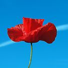 The Sky Poppy by Barrie Woodward