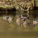 The Wood Duck Gang by KatMagic Photography