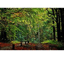 Saying Good-bye to October Photographic Print