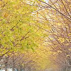 Autumn Colors, Roosevelt Island, New York City by lenspiro
