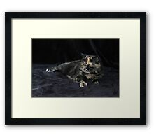 Milly - Tortie Tabby Exotic Shorthair Cat Framed Print