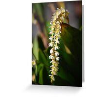 Dendrochilum cobbianum Greeting Card