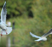 Flying Gals by Paul Hutcheon