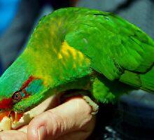 Green Parrot by lezvee