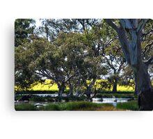 Oz Countryside...canola framing eucalypts. Canvas Print