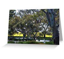 Oz Countryside...canola framing eucalypts. Greeting Card