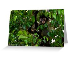 Baby Spider Monkey Greeting Card