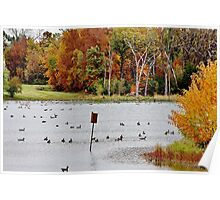 Geese and Ducks at the Pond Poster