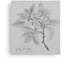 pencil sketch - study of leaves 1880 Canvas Print