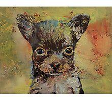 Chihuahua Photographic Print