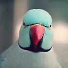 Angry Bird by Tangerine-Tane