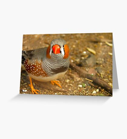 Zebra Finch Greeting Card