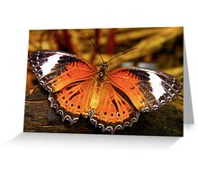 Orange Lacewing Butterfly Greeting Card