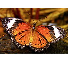 Orange Lacewing Butterfly Photographic Print
