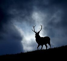 The stag by Macrae images