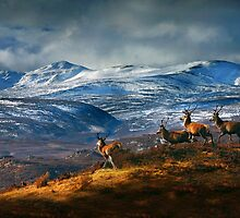 Above Strathglass by Macrae images
