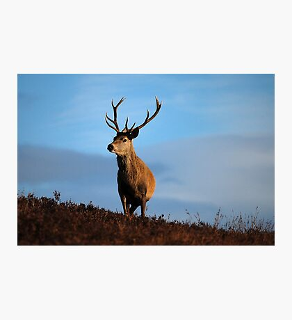 Highland Stag Photographic Print
