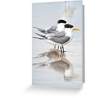 Crested tern pair Greeting Card