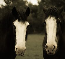 Two Horses  by Aaron  Fleming