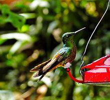Proud Hummingbird by Al Bourassa