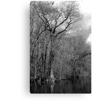 Riverton Cypress Canvas Print