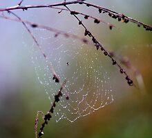 Jeweled Web - Ohio by Tony Wilder