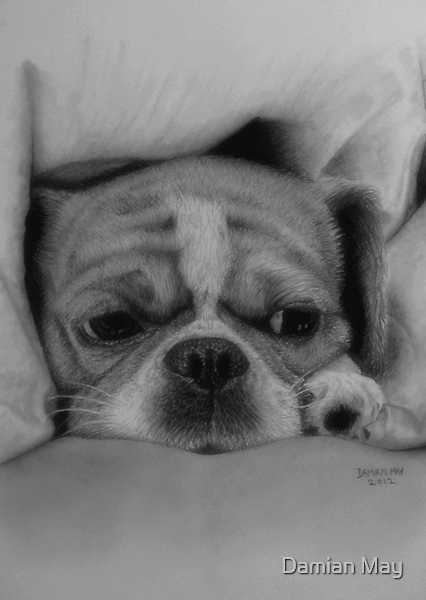 Pooch 3 by Damian May