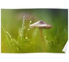 Mesmerizing Mushroom.... Poster