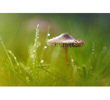 Mesmerizing Mushroom.... Photographic Print