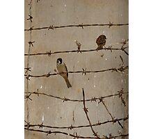 Prison Birds Photographic Print