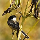 Feeding On Wild Seeds by Thomas Young