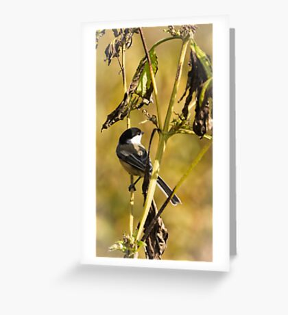 Feeding On Wild Seeds Greeting Card