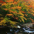AUTUMN COLORS ALONG LITTLE RIVER by Chuck Wickham