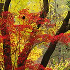 High Contrast Autumn by Diane Schuster