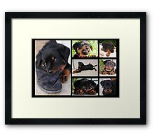 Collage Of Cute Female Rottweiler Puppy Framed Print