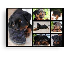Collage Of Cute Female Rottweiler Puppy Canvas Print