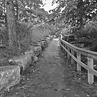 Pathways 2 - Black And White Photography by FinlayMcNevin
