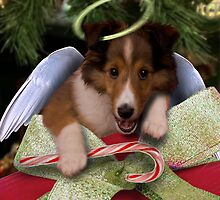 Christmas Angel Sheltie by jkartlife