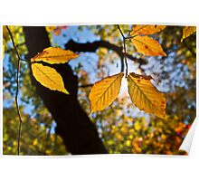 Golden Leaves of Autumn Poster