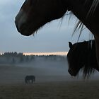 Horses. October evening. Norway. by UpNorthPhoto