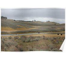 Yellowstone Where the Buffalo Roam Poster