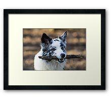 Stick Merle Framed Print