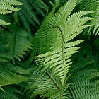 Ferns in My Garden by edesigns14