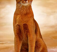 Abyssinian cat sorrel color by Nika Lerman
